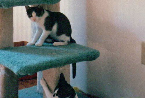 warrior cats create a cat
