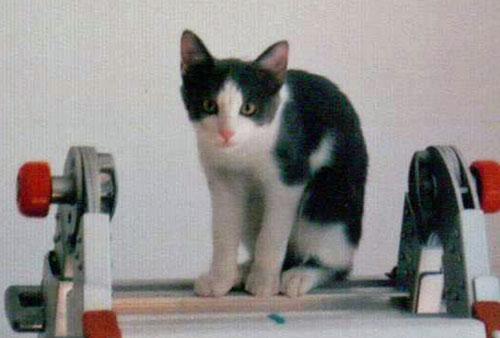 my indoor cat is missing