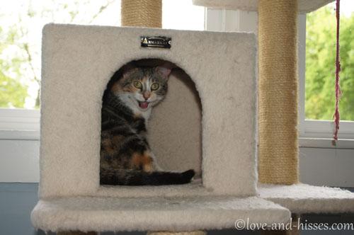 cat training institutes in madurai