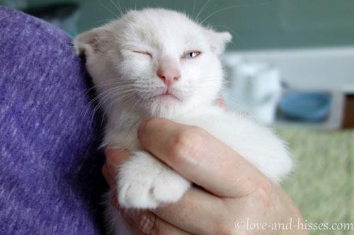 awolnation sail cat