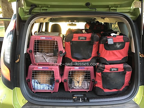 73 cats in a Kia Soul