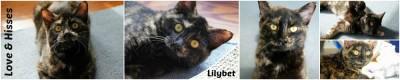 Lilybet, the unpregnant faker