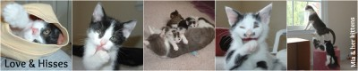 Mia & her kittens