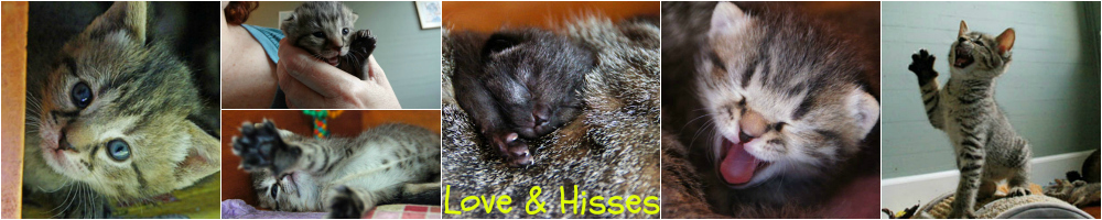 Love & Hisses