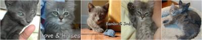 Rambo & Jodie