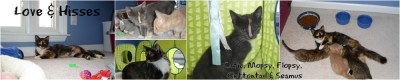 Catie and her kittens - Flopsy, Mopsy, Cottontail, and Seamus.