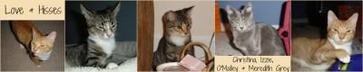Christina, Izzie, O'Malley & Meredith Grey (Grey's Anatomy Kittens)