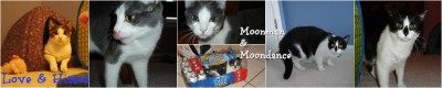 Moonman and Moondance (Moonman is now Joe Bob!)