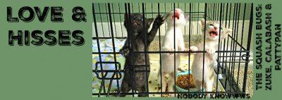 jailbanner2